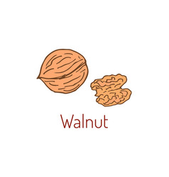walnut hand drawn vector image