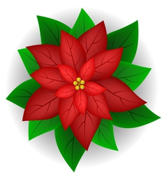 Poinsettia flower vector