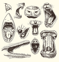 animals with open mouth heads of roaring vector image vector image