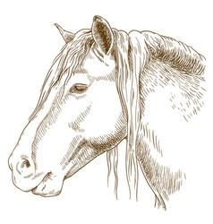 Engraving of horse head vector