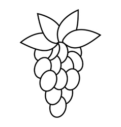 Grapes icon outline style vector
