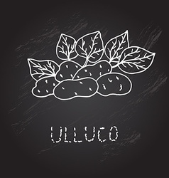 Hand drawn ulluco vector