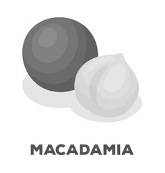 macadamiadifferent kinds of nuts single icon in vector image