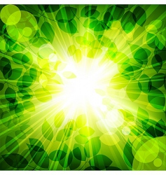 Sun in green leaves vector