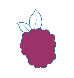 Blackberry fresh fruit vector