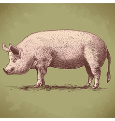 Engraving big pig retro vector