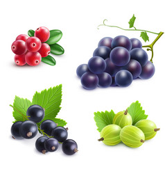 Realistic Berries Set vector image