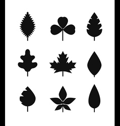 Different leaf silhouettes collection vector image