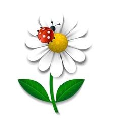 Camomile and ladybug vector