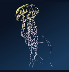 jellyfish painted by hand vector image vector image