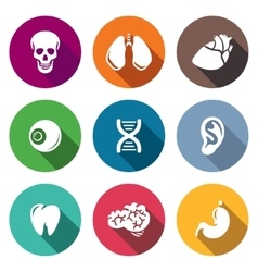 Internal organs icons set vector