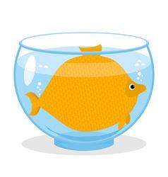 Fat fish in aquarium fat marine animal big vector