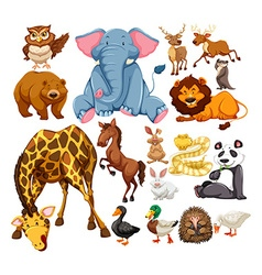 Wild animals on white vector
