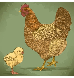 Engraving chicken and chick retro vector