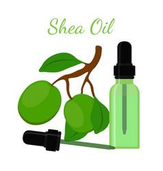 Shea nut oil in bottlecartoon flat style vector