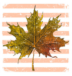 hand drawn maple leaf vector image vector image