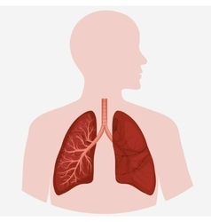 Human lung anatomy diagram vector