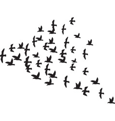 A Flock of Birds vector image vector image