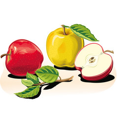 Group of ripe apples one cut in half vector