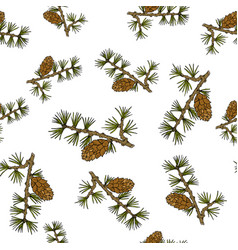 Larch cones and branches vector