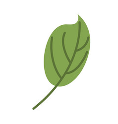 green leaf isolated leaves on white background vector image