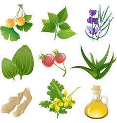 Herbal medicine vector