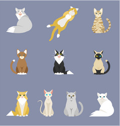 different cartoon cats set vector image