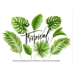Tropical palm leaves set isolated on white vector