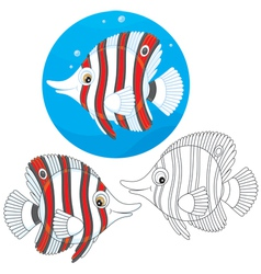 Coral fish vector image vector image