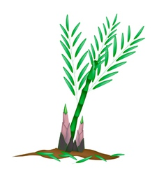 Fresh Bamboo Plant on A White Background vector image vector image