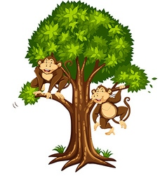 Two monkeys on the tree vector image