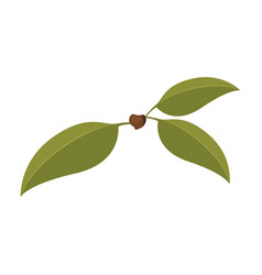 white background with three green leaves of cherry vector image