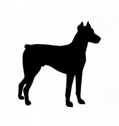 Doberman pinscher vector image