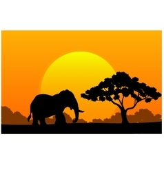 Cartoon animal elephant in the africa vector