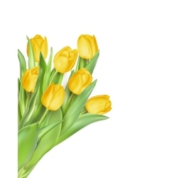 Tulip flowers as a holiday postcard eps 10 vector