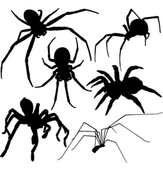 Spider silhouettes on white background vector image
