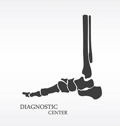 Foot bone anatomy vector
