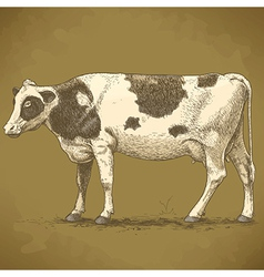 Engraving cow retro vector