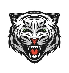Face of a white bengal tiger vector image