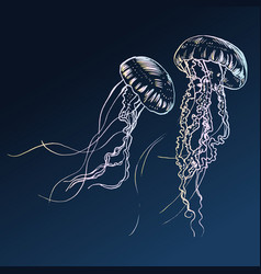 jellyfish painted by hand vector image