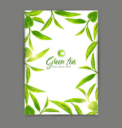 template with a frame of green tea leaves vector image