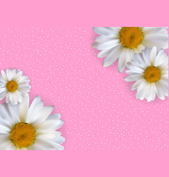 abstract chamomile flowers natural spring and vector image vector image