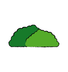 Bush foliage botanic nature environment image vector