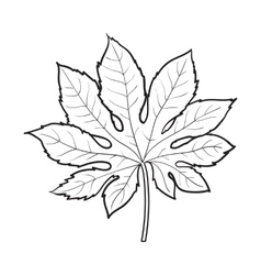 Full leaf of fatsia japonica palm tree sketch vector