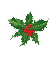 holly berry christmas icon vector image vector image
