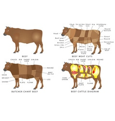 Beef chart vector