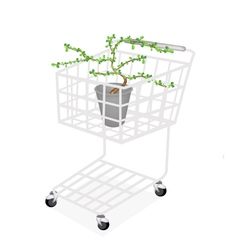 Bonsai tree and plant in a shopping cart vector