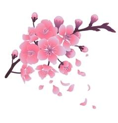 Graphic sakura flowers vector image vector image