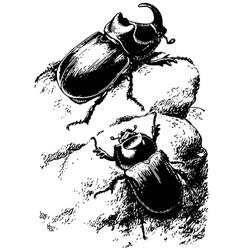 rhinoceros beetle oryctes nasicornis vector image vector image
