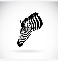 an zebra head on white background wild animals vector image vector image